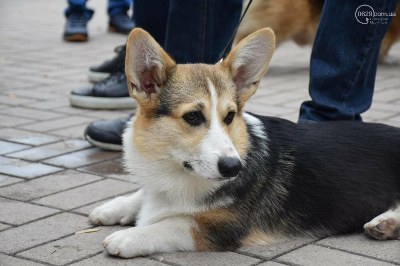 В Мариуполе выбрали лучшую собаку осени, - ФОТОРЕПОРТАЖ, фото-2