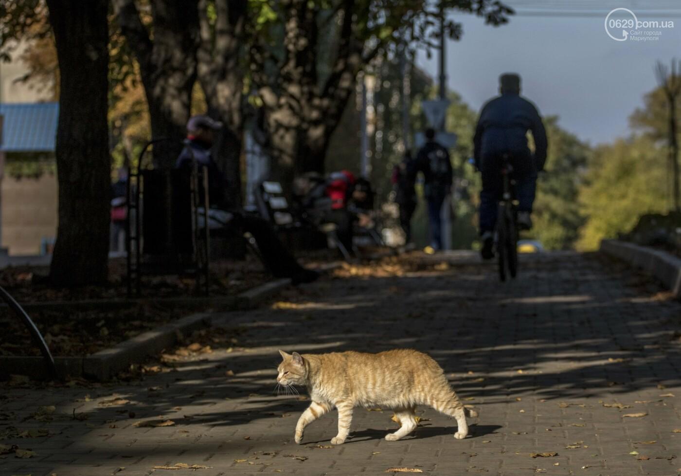 «Уставшее лето».  Фоторепортаж с осенних улиц Мариуполя, фото-15