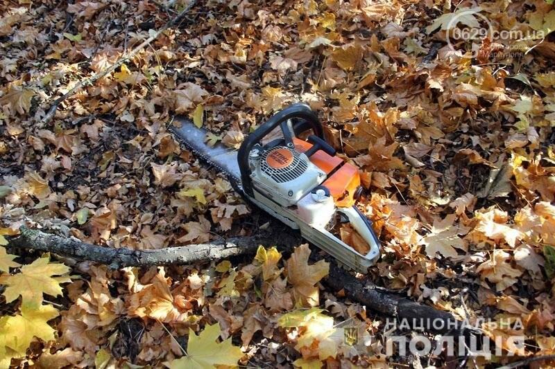 Компания преступников уничтожила лес под Мариуполем на миллион гривен,- ФОТО, фото-4