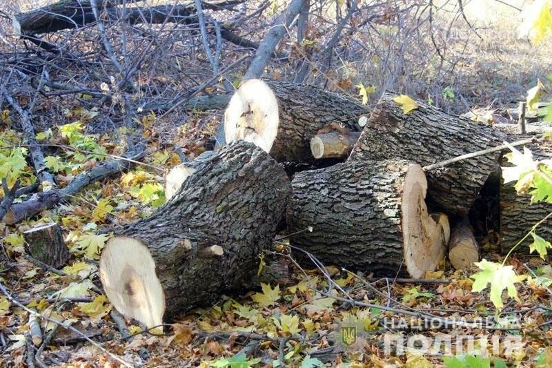 Компания преступников уничтожила лес под Мариуполем на миллион гривен,- ФОТО, фото-2