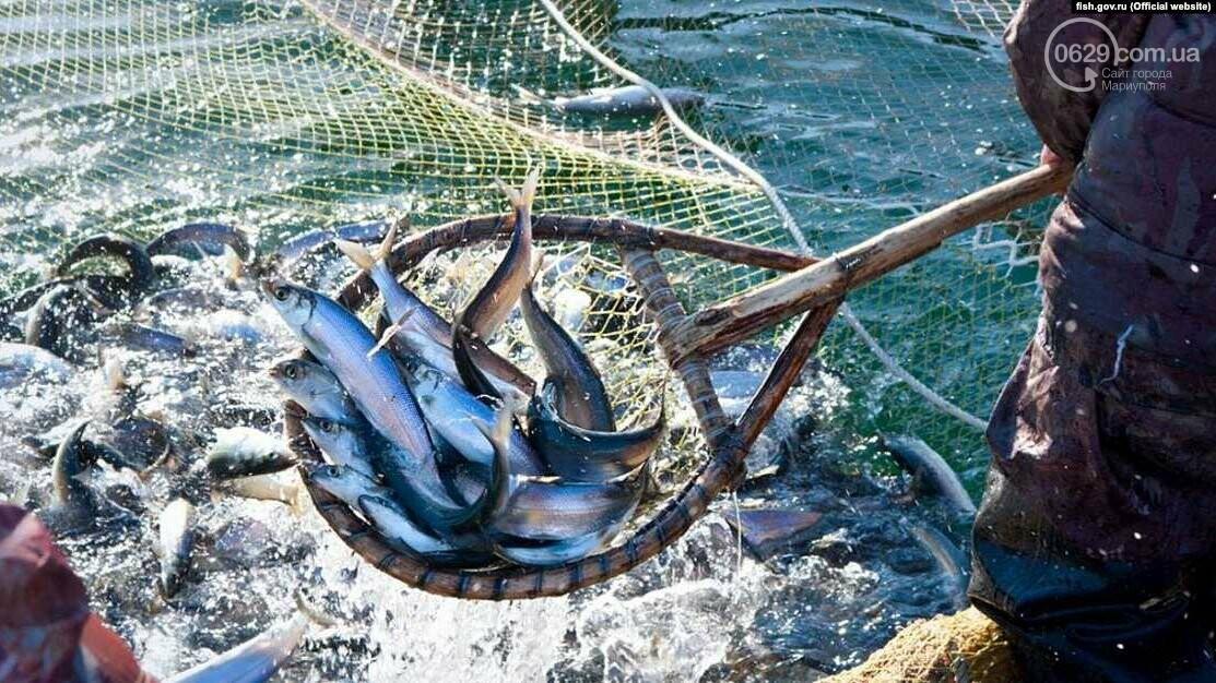 Россия заставляет Украину подписать протокол о вылове рыбы в Азовском море,- ВИДЕО, фото-2