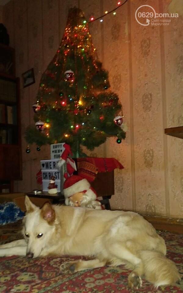 Мариуполец получил срок за избиение собак, фото-1