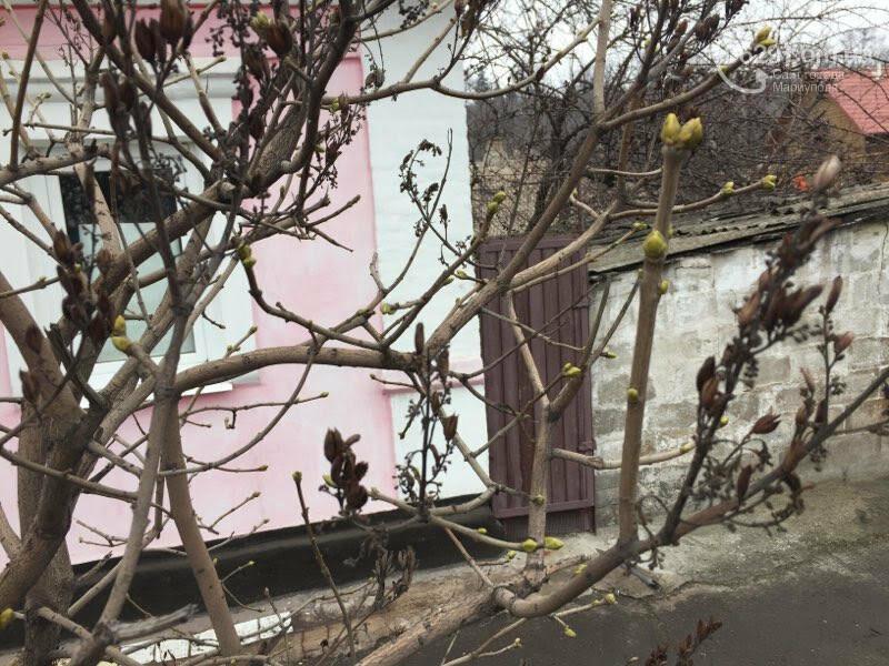 Аномальная зима. Какие причуды приготовил мариупольцам  теплый январь,- ФОТОРЕПОРТАЖ, фото-4