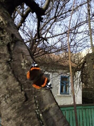 Аномальная зима. Какие причуды приготовил мариупольцам  теплый январь,- ФОТОРЕПОРТАЖ, фото-7