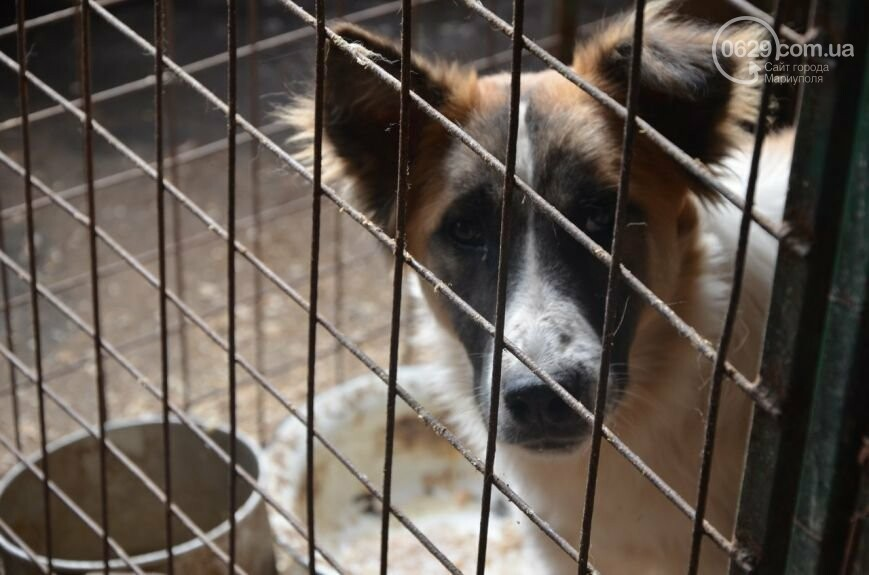 """В Мариуполе КПП """"Щастливі тварини"""" превратилось в концлагерь для собак, - ФОТО, ВИДЕО, фото-12"""