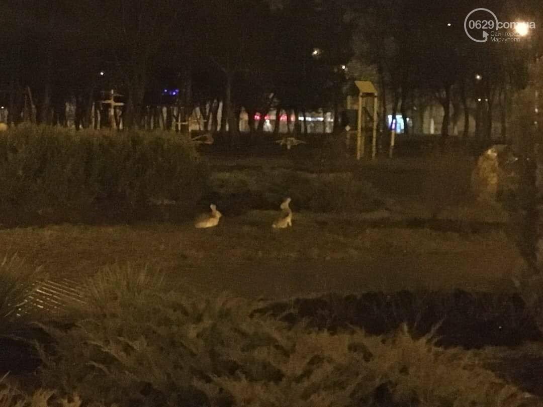 В Приморском парке Мариуполя бегают зайцы, - ФОТО, фото-1