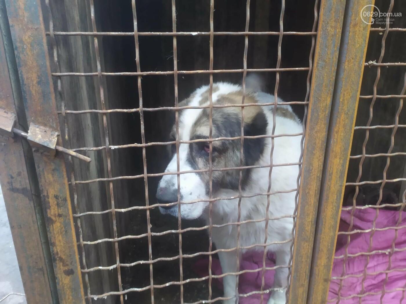 """В Мариуполе КПП """"Щастливі тварини"""" превратилось в концлагерь для собак, - ФОТО, ВИДЕО, фото-9"""
