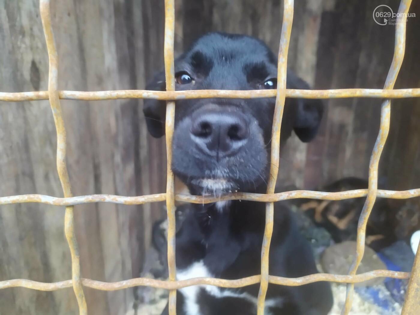 """В Мариуполе КПП """"Щастливі тварини"""" превратилось в концлагерь для собак, - ФОТО, ВИДЕО, фото-4"""