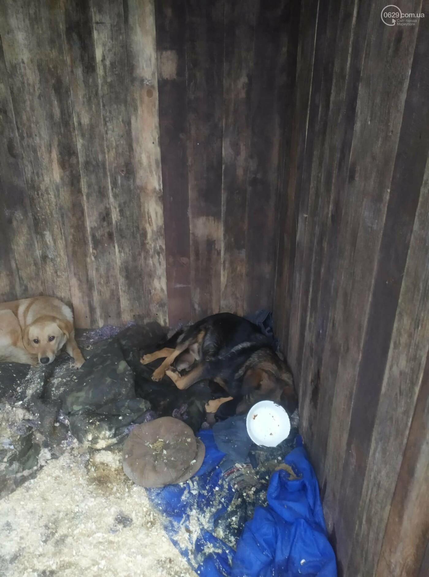 """В Мариуполе КПП """"Щастливі тварини"""" превратилось в концлагерь для собак, - ФОТО, ВИДЕО, фото-7"""