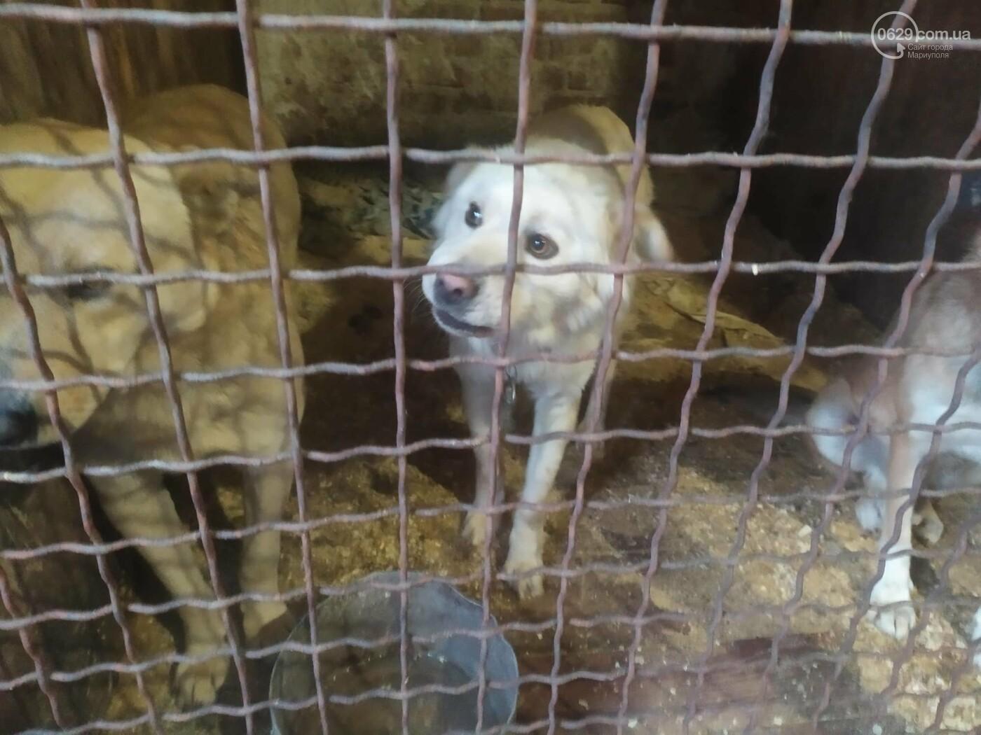 """В Мариуполе КПП """"Щастливі тварини"""" превратилось в концлагерь для собак, - ФОТО, ВИДЕО, фото-6"""