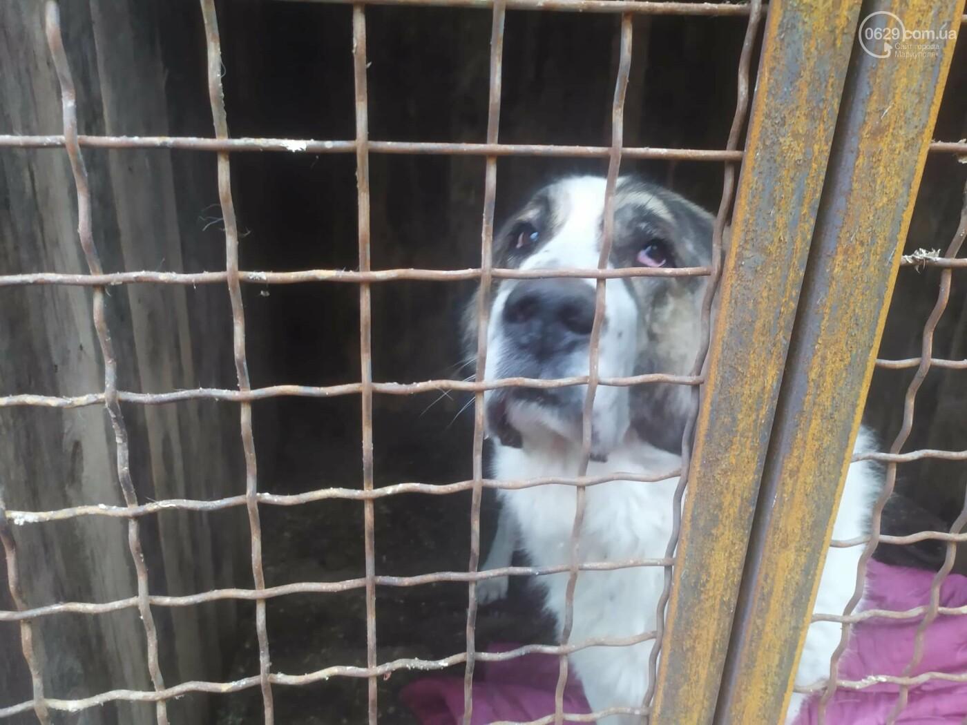 """В Мариуполе КПП """"Щастливі тварини"""" превратилось в концлагерь для собак, - ФОТО, ВИДЕО, фото-10"""