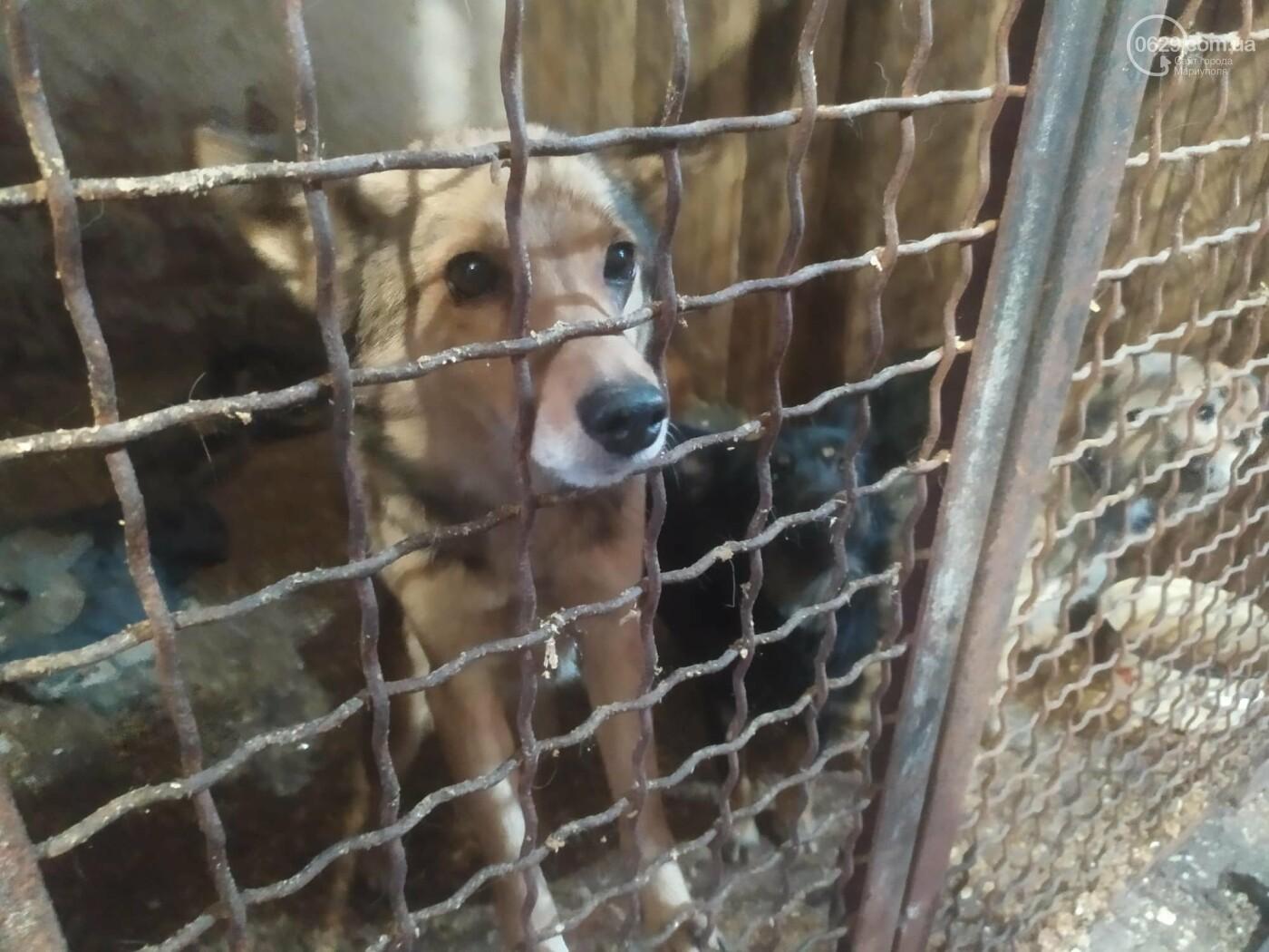 """В Мариуполе КПП """"Щастливі тварини"""" превратилось в концлагерь для собак, - ФОТО, ВИДЕО, фото-5"""