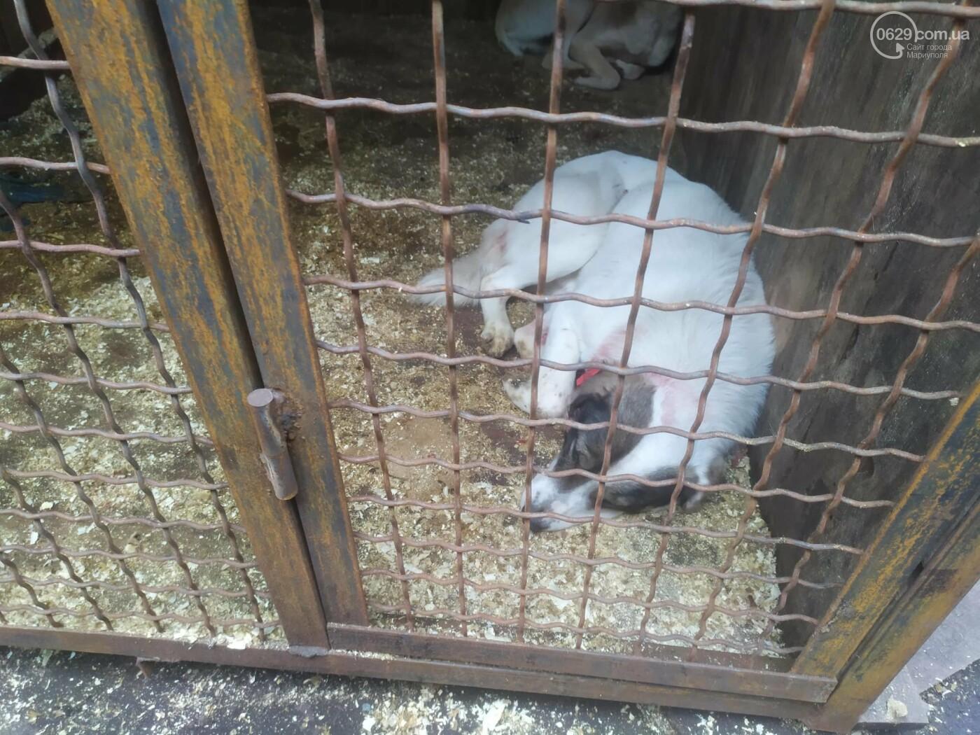 """В Мариуполе КПП """"Щастливі тварини"""" превратилось в концлагерь для собак, - ФОТО, ВИДЕО, фото-8"""
