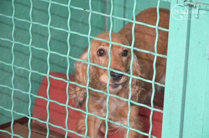"""В Мариуполе КПП """"Щастливі тварини"""" превратилось в концлагерь для собак, - ФОТО, ВИДЕО, фото-14"""
