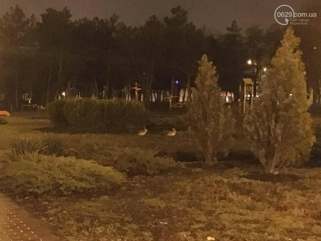 В Приморском парке Мариуполя бегают зайцы, - ФОТО, фото-2
