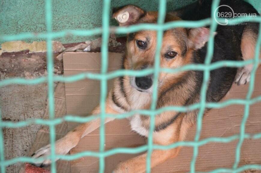 """В Мариуполе КПП """"Щастливі тварини"""" превратилось в концлагерь для собак, - ФОТО, ВИДЕО, фото-11"""
