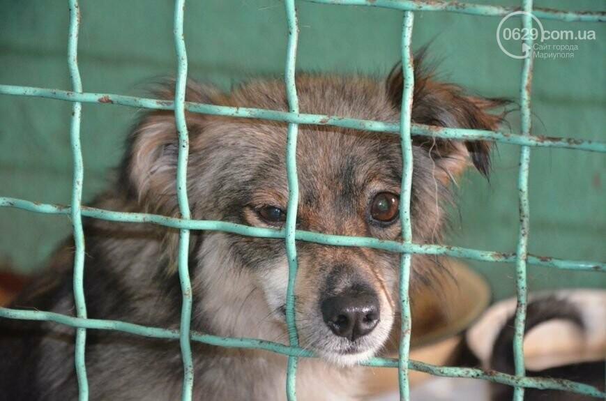 """В Мариуполе КПП """"Щастливі тварини"""" превратилось в концлагерь для собак, - ФОТО, ВИДЕО, фото-13"""