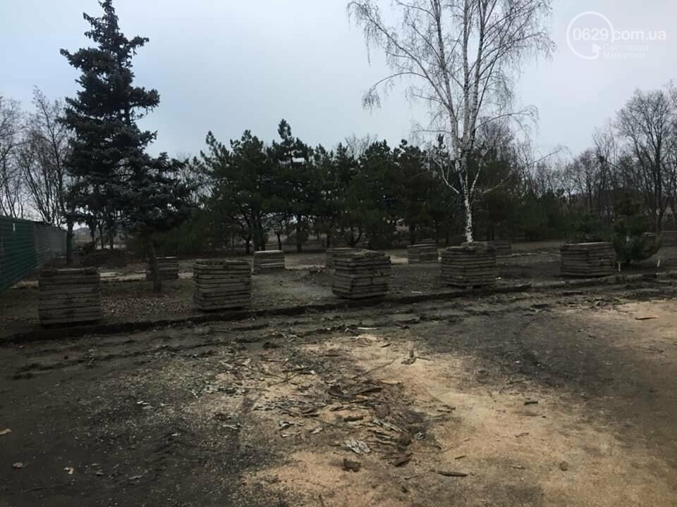 Какие деревья пойдут под снос при реконструкции сквера возле площади Свободы,- ФОТО, фото-3