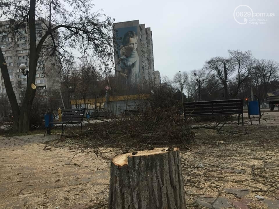 Какие деревья пойдут под снос при реконструкции сквера возле площади Свободы,- ФОТО, фото-14