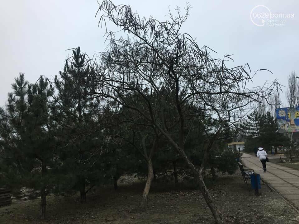 Какие деревья пойдут под снос при реконструкции сквера возле площади Свободы,- ФОТО, фото-10