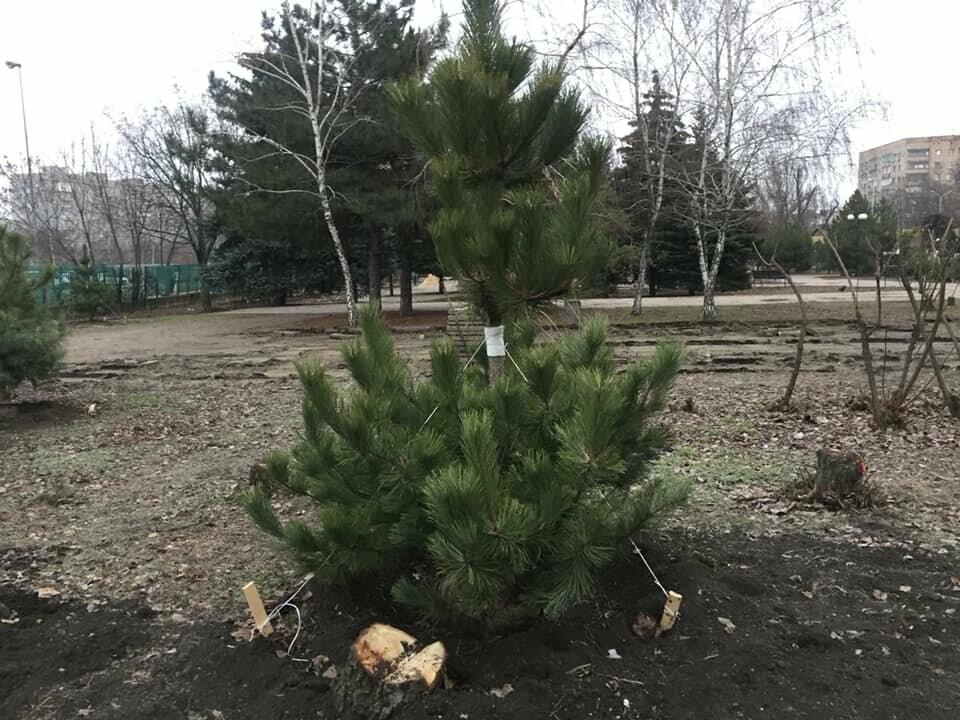 Какие деревья пойдут под снос при реконструкции сквера возле площади Свободы,- ФОТО, фото-7