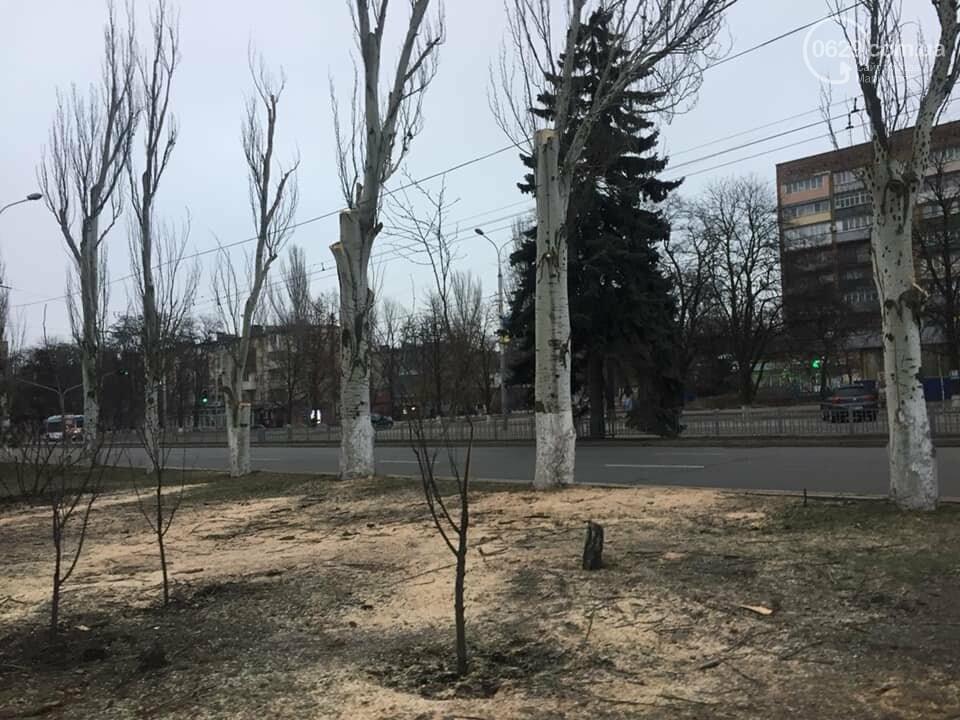 Какие деревья пойдут под снос при реконструкции сквера возле площади Свободы,- ФОТО, фото-5