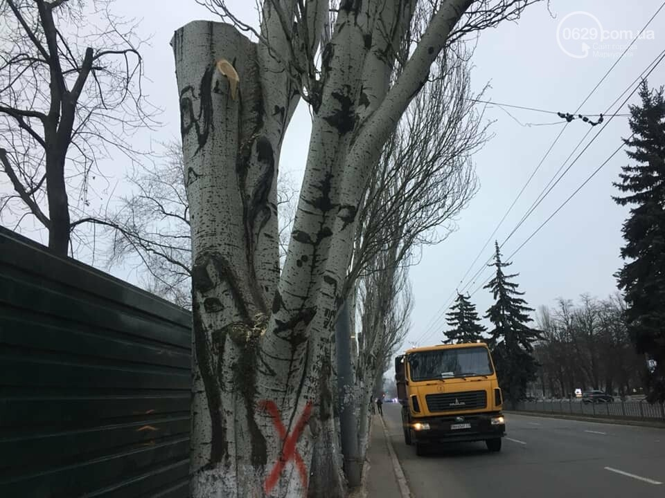 Какие деревья пойдут под снос при реконструкции сквера возле площади Свободы,- ФОТО, фото-4