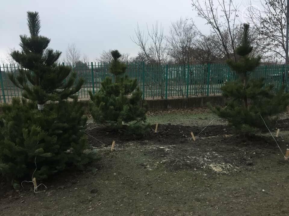 Какие деревья пойдут под снос при реконструкции сквера возле площади Свободы,- ФОТО, фото-13