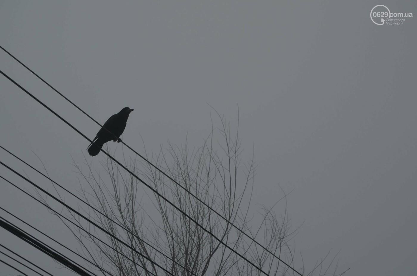 Мариуполь в тумане, усиливаются неблагоприятные метеорологические условия, - ФОТО, фото-5