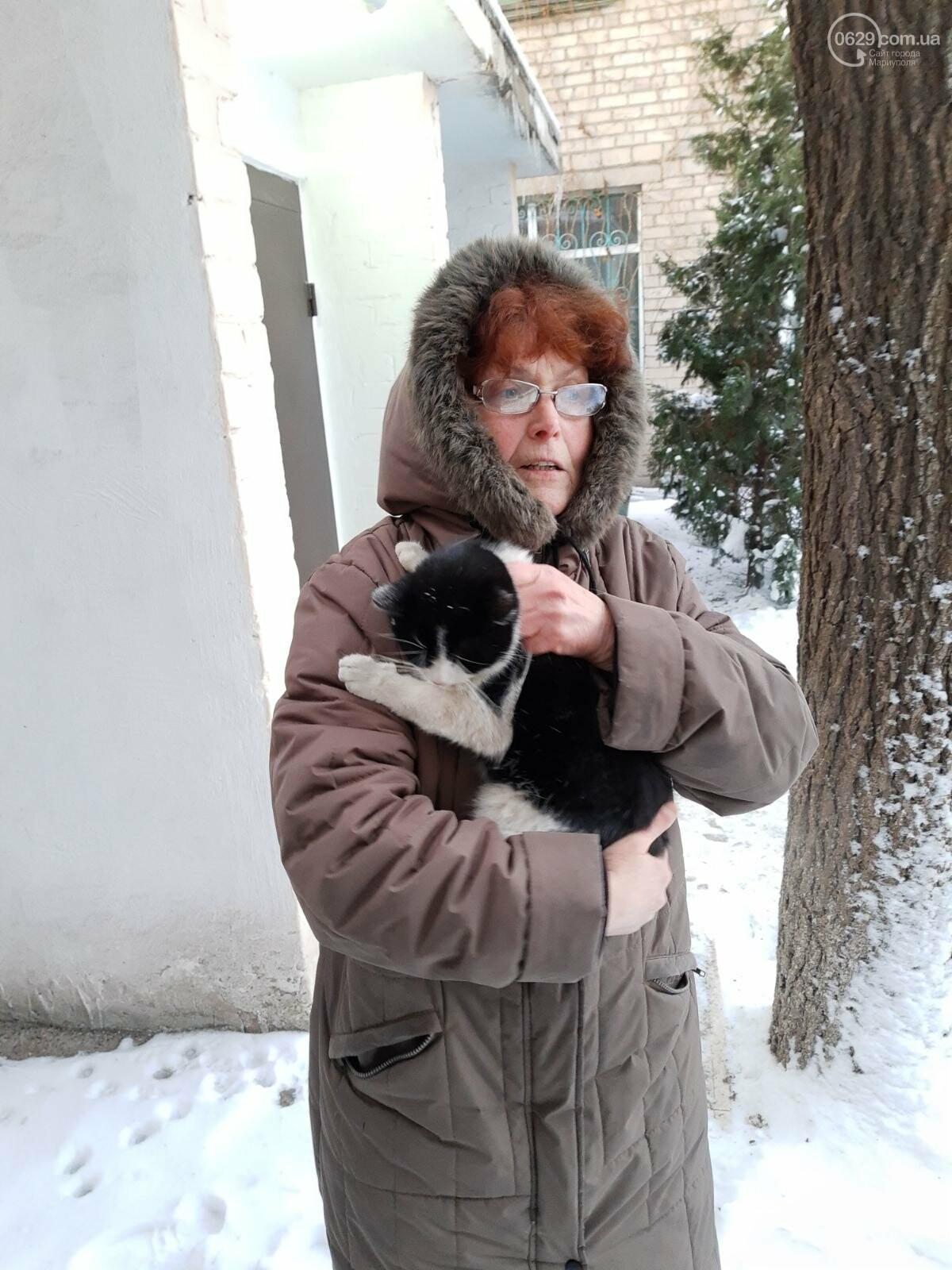 В Мариуполе спасли кота, который двое суток просидел на крыше, - ФОТО, фото-3