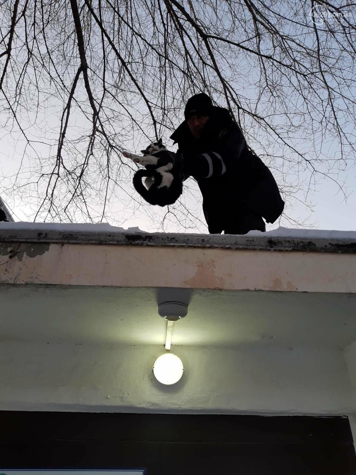 В Мариуполе спасли кота, который двое суток просидел на крыше, - ФОТО, фото-2