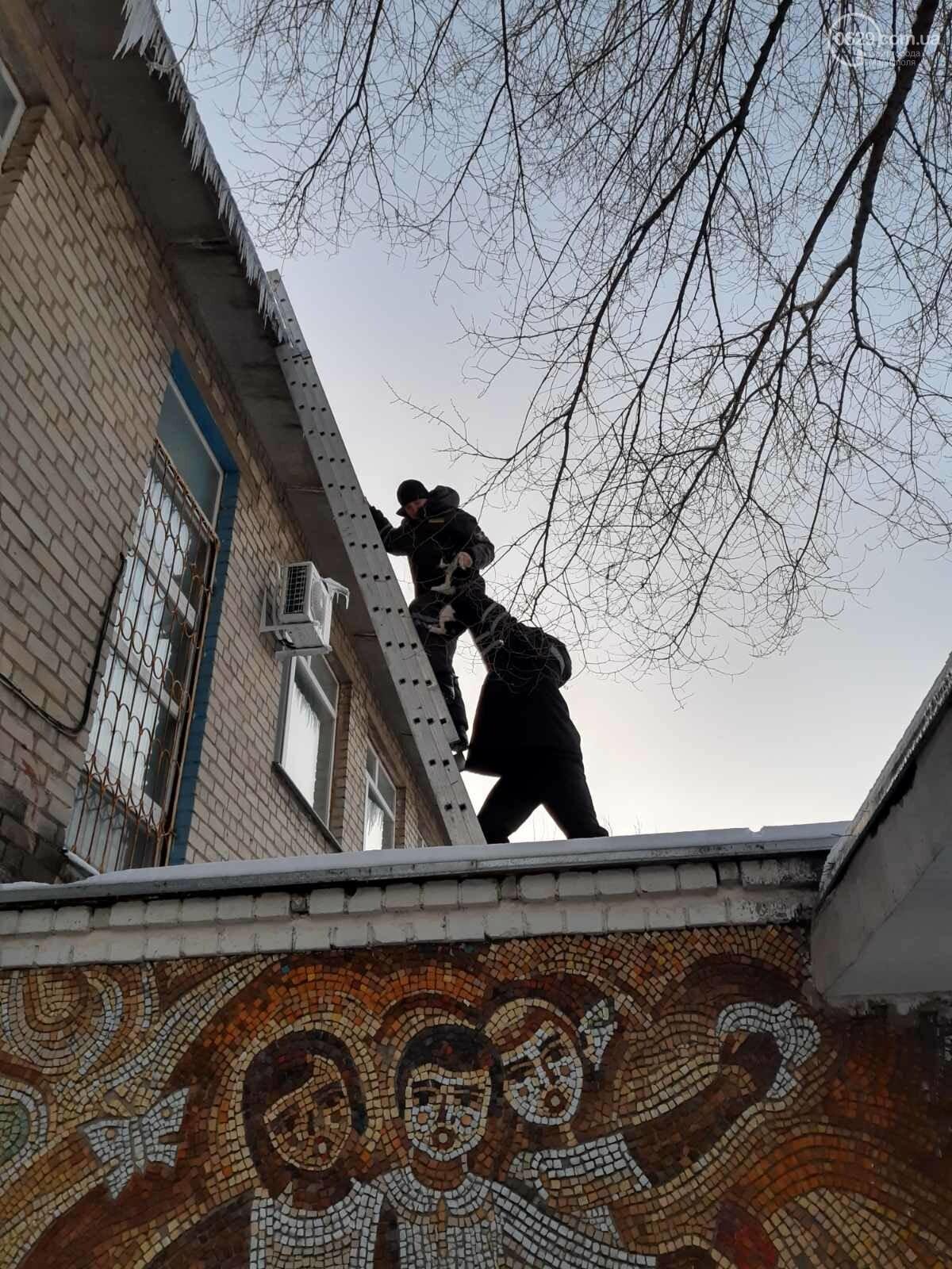 В Мариуполе спасли кота, который двое суток просидел на крыше, - ФОТО, фото-1
