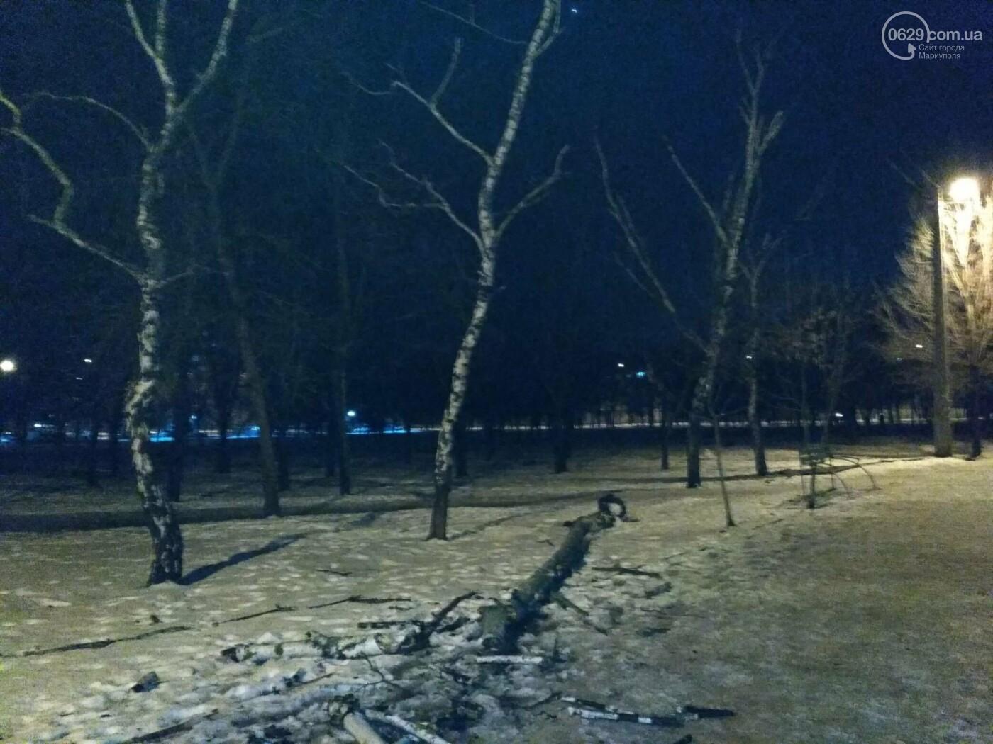 В парке Левобережья рухнула сухая береза, - ФОТОФАКТ, фото-4