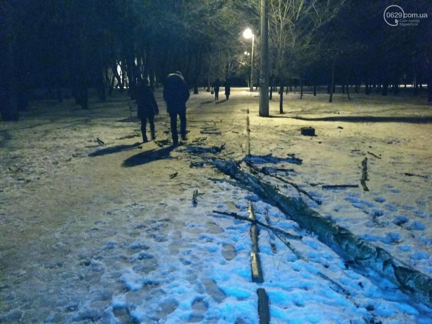 В парке Левобережья рухнула сухая береза, - ФОТОФАКТ, фото-2