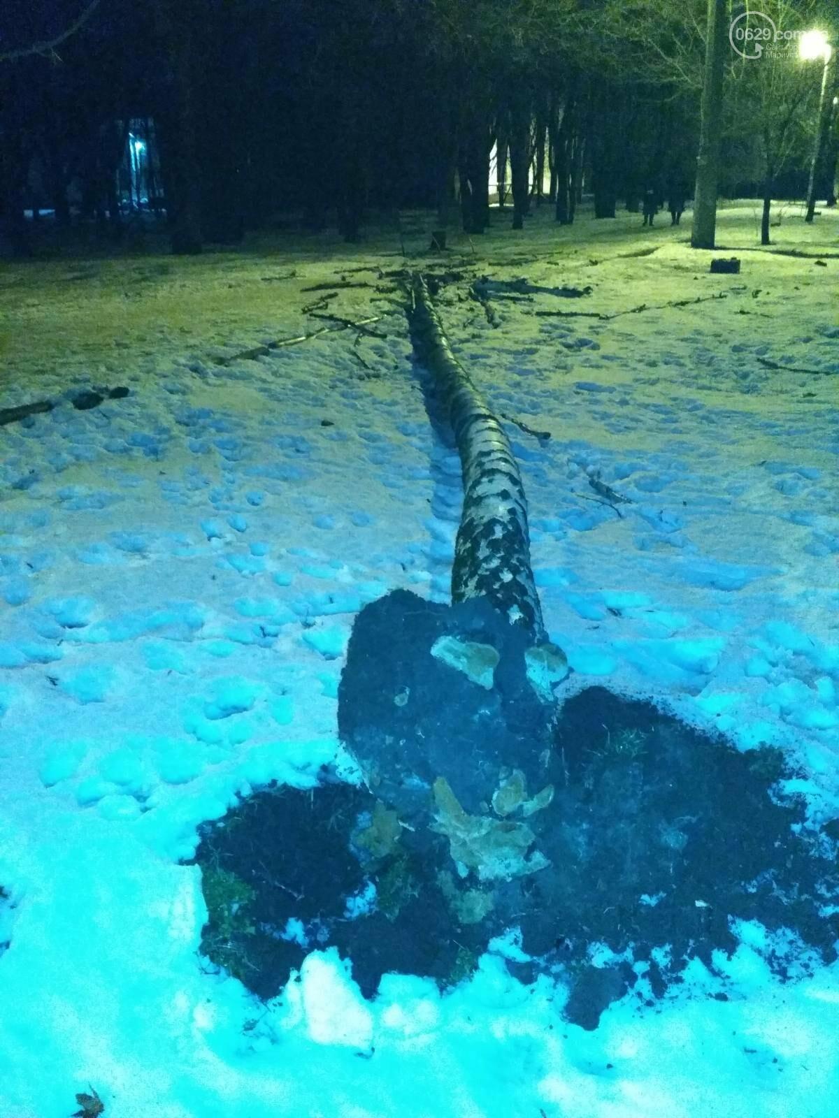В парке Левобережья рухнула сухая береза, - ФОТОФАКТ, фото-1