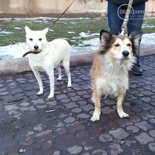 В Мариуполе, после смерти матери, сыновья выгнали на улицу ее собак, - ФОТО, фото-1