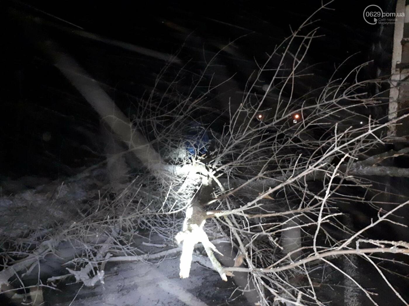 В Мариуполе штормовой ветер обрушил деревья на автомобили, - ФОТО, фото-1