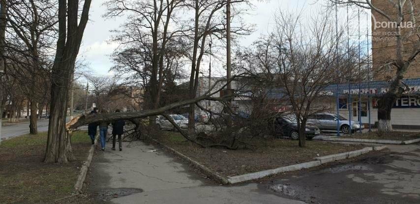 Поваленные деревья, поврежденные машины, крыши, дома, обесточенные кварталы… Ураган в Мариуполе не стихает, фото-2