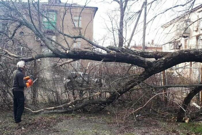 В Мариуполе 15-метровое дерево угрожало  детям,- ФОТО, фото-1