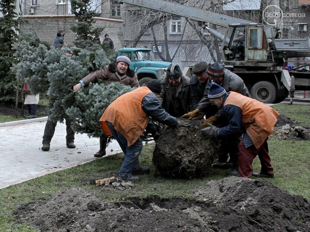 В Мариуполе пытались похитить голубую ель на проспекте Мира. Злоумышленников задержала пенсионерка, - ФОТО, фото-1