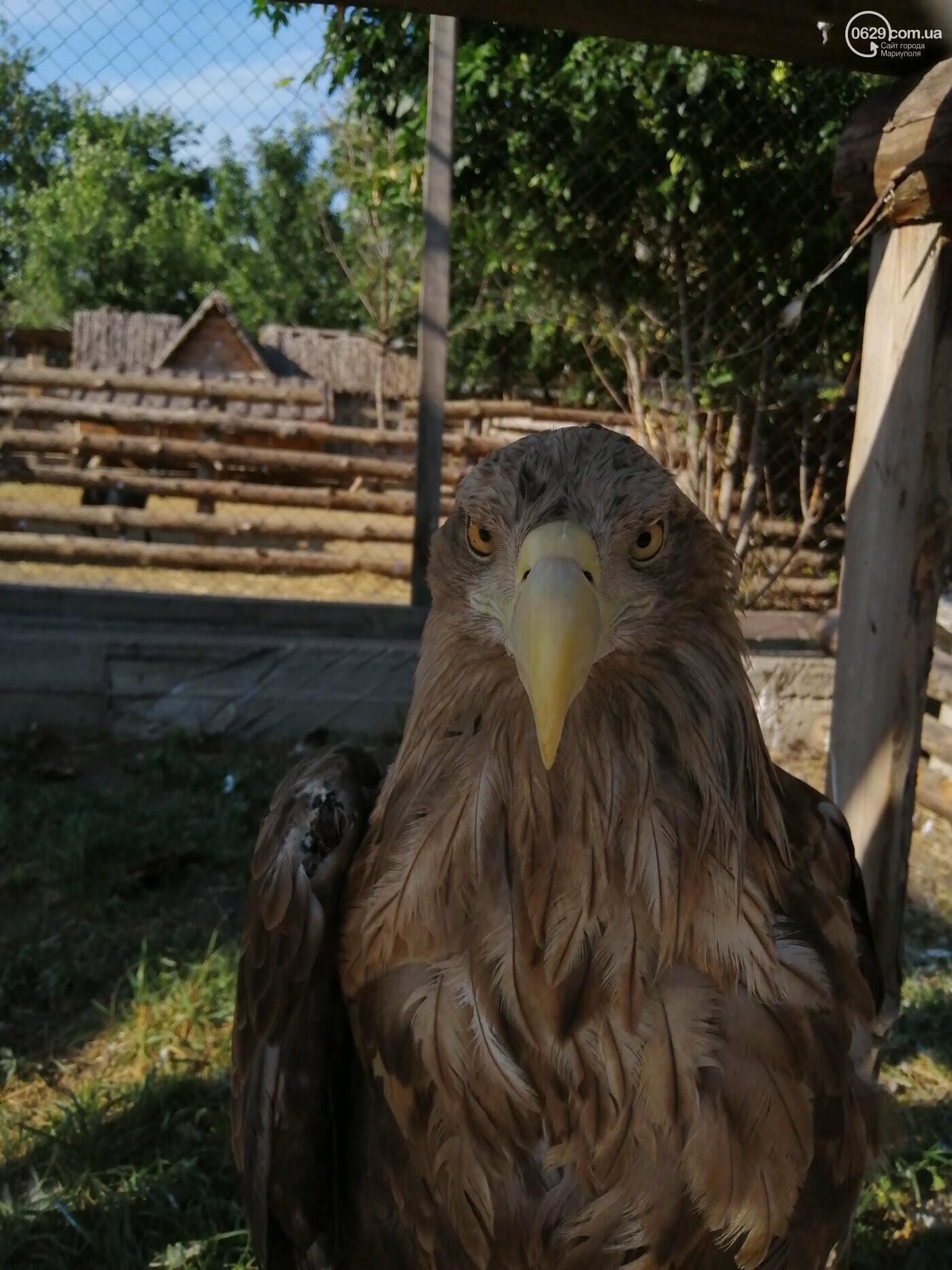 В Мариуполе из-за карантина голодают звери, - ФОТО, фото-4