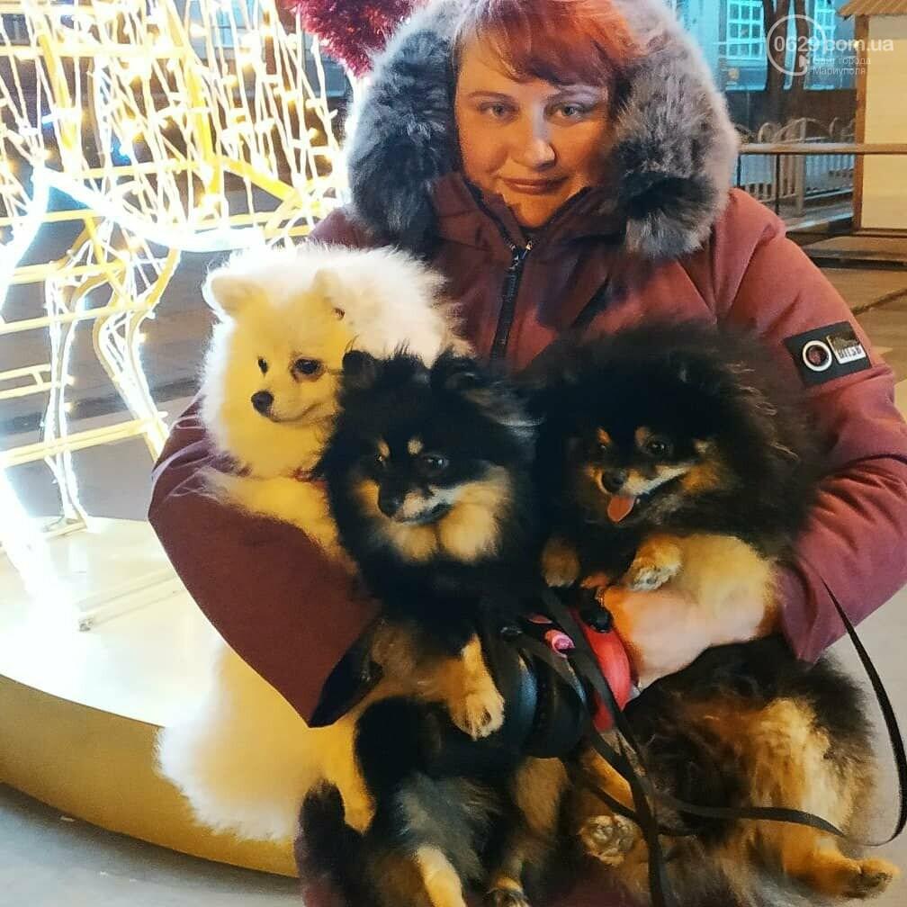 Коронавирус и собаки: одних закрывают в сарае, других используют для прогулок, - ВИДЕО, фото-1