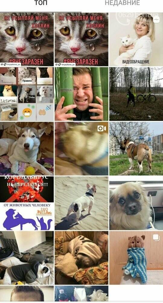 Коронавирус и собаки: одних закрывают в сарае, других используют для прогулок, - ВИДЕО, фото-2