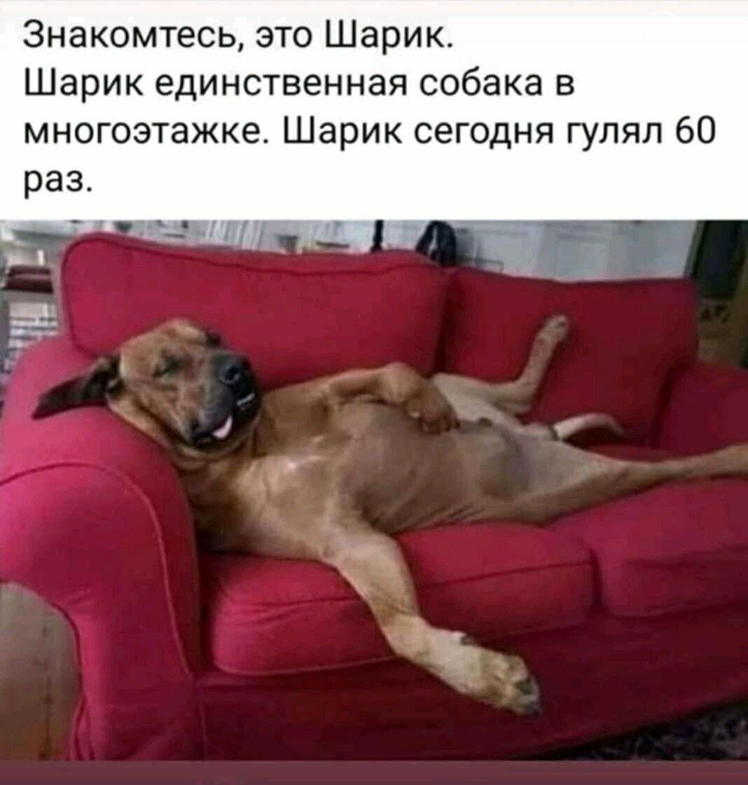 Коронавирус и собаки: одних закрывают в сарае, других используют для прогулок, - ВИДЕО, фото-4