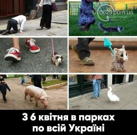 Коронавирус и собаки: одних закрывают в сарае, других используют для прогулок, - ВИДЕО, фото-3
