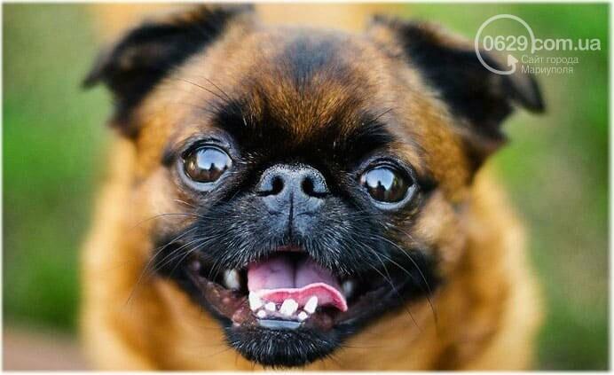 Cколько стоит купить собаку в Мариуполе, фото-1