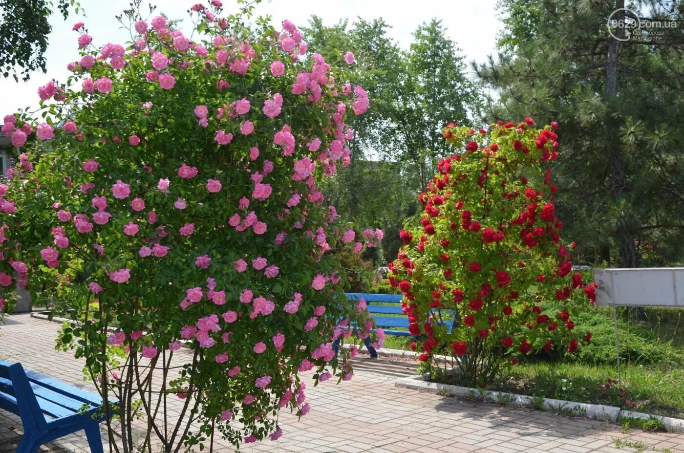 База «Троянда» корпус №5 в Мелекино - комфортный отдых у самого моря!, фото-5