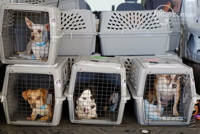 Трагическая смерть 38 щенков на борту МАУ: собаки погибли из-за чьей-то жадности, - ФОТО, фото-5