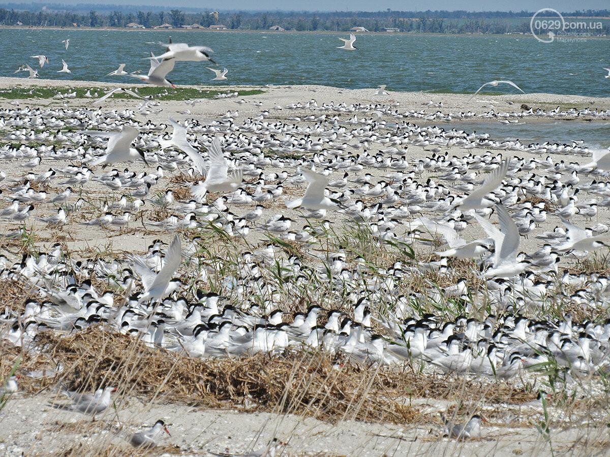 Люди против птиц. Почему пограничники  запрещают ходить на край Белосарайской косы,- ФОТО, фото-3