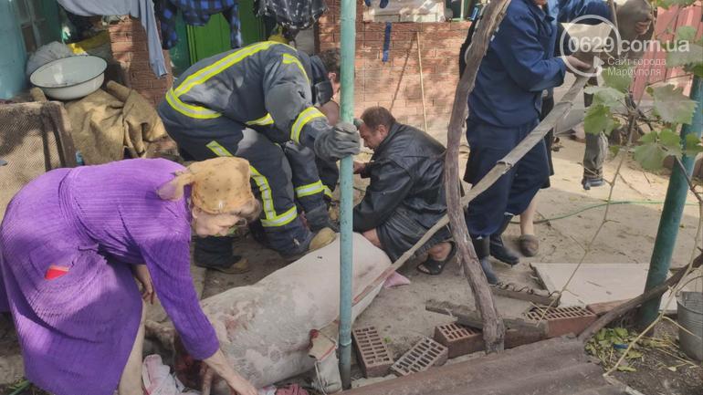 В Мариуполе  свинью доставали из ямы, - ФОТО, фото-1